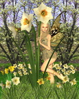 Daffodil Fairy with Spring Background